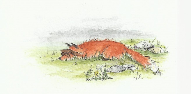 sad fox (2)